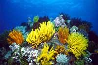 ayvalik mercanlar